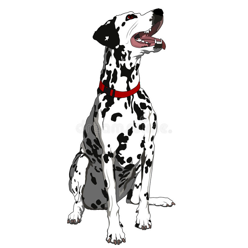 Download Obedient Dalmatian stock vector. Image of animal, cheerful - 13656280