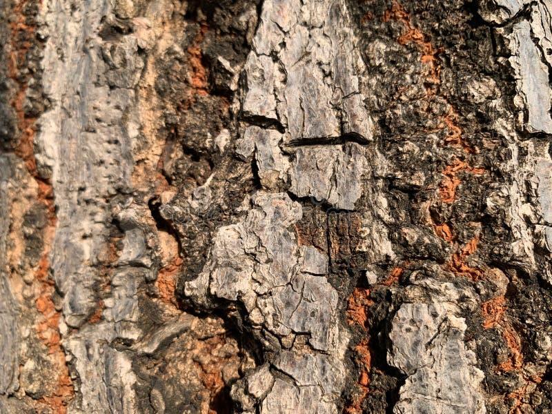 Oben geschlossen von der Oberfläche eines großen braunen Baumstammes, Baumbeschaffenheit mit brauner schwarzer glay abstrakter  lizenzfreies stockfoto