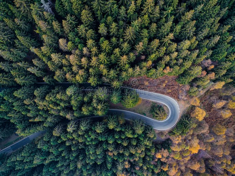 Obenliegende von der Luftdraufsicht über Haarnadeldrehungs-Straßenbiegung in Landschaftsherbst-Kiefer forestFall orange, grüner,  lizenzfreie stockfotos