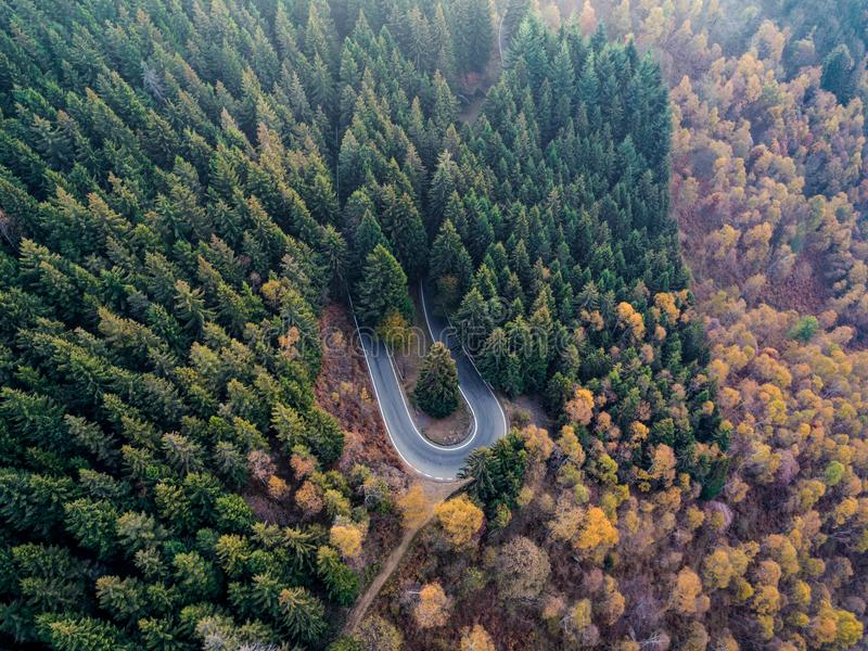 Obenliegende von der Luftdraufsicht über Haarnadeldrehungs-Straßenbiegung in Landschaftsherbst-Kiefer forestFall orange, grüner,  lizenzfreie stockfotografie