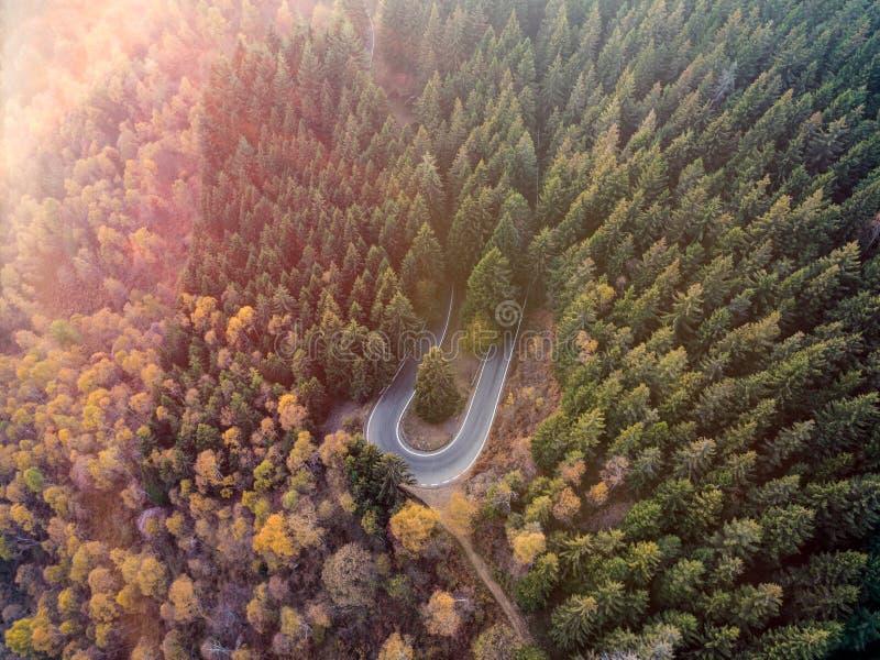 Obenliegende von der Luftdraufsicht über Haarnadeldrehungs-Straßenbiegung in Landschaftsherbst-Kiefer forestFall orange, grüner,  stockbilder