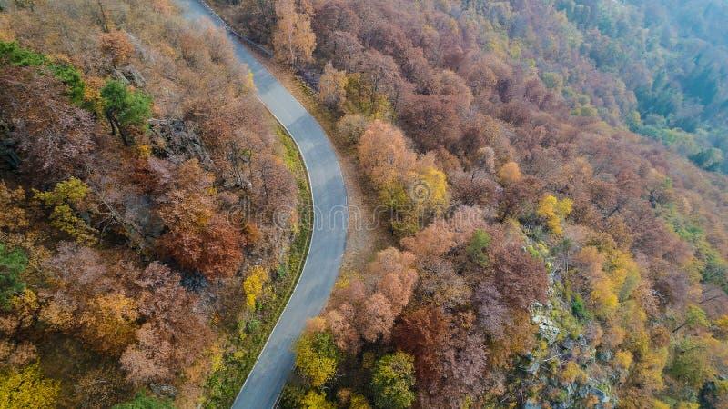 Obenliegende von der Luftdraufsicht über Kurvenstraßenbiegung in buntem Landschaftsherbst forestFall orange, grüner, gelber, rote stockbild