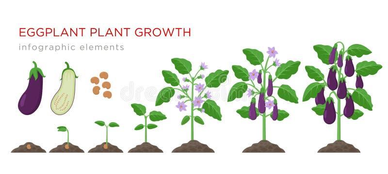 Oberżyny dorośnięcia proces od ziarna dojrzali warzywa na roślinach odizolowywać na białym tle Oberżyna przyrosta sceny ilustracja wektor