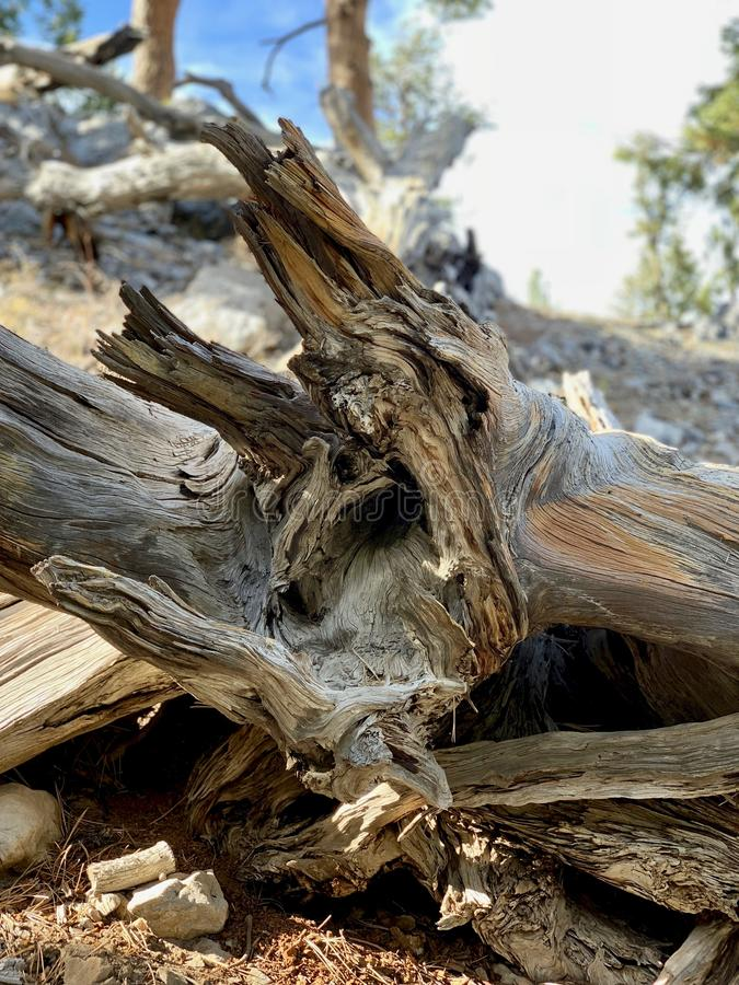 Obere Bristlecone-Schleifen-Spur, Mt Charleston, Nevada lizenzfreies stockfoto