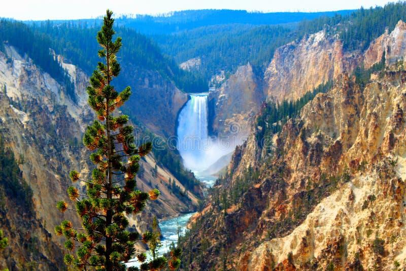 Obere Fälle des Yellowstone Nationalpark Schluchtdorfs der Yellowstone-Landschaftsberge und der Waldschönen Klippen stockfotografie