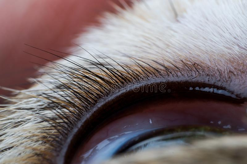 oberes Augenlid einer Hundenahaufnahme stockfotografie