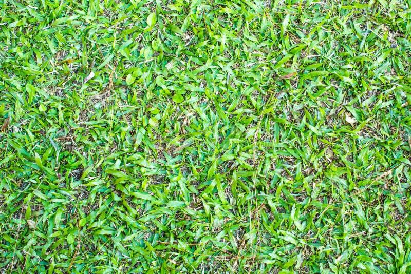 Oberfläche des grünen Grases stockfotografie