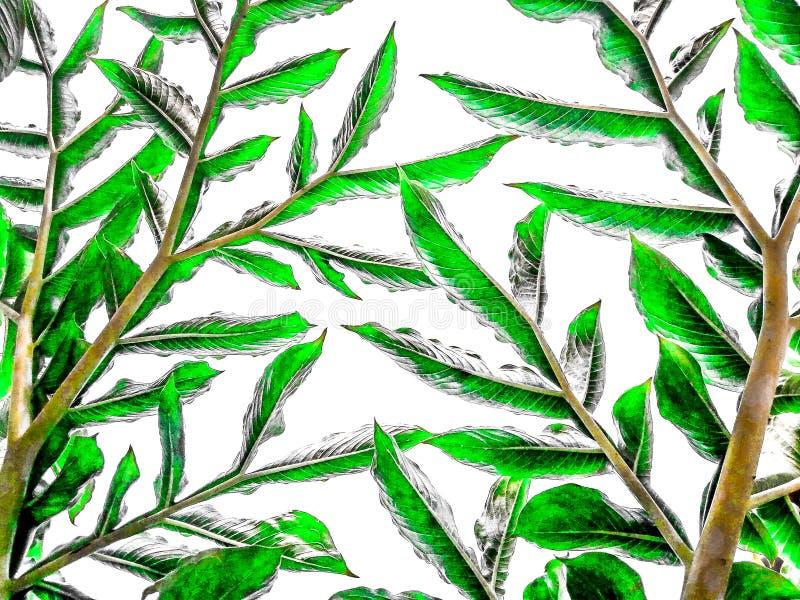 Oberfläche des Grüns lässt Muster auf weißem Hintergrund Betriebsblatt frisch für Hintergrund stockbild