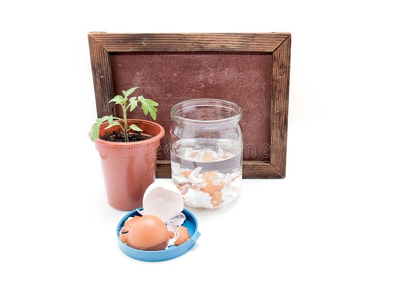 Oberflächendüngung von Tomaten mit Kalzium lizenzfreie stockfotografie