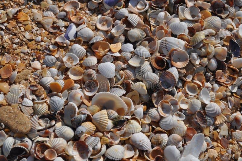 Oberteile auf dem Strand im Sommer lizenzfreie stockfotos