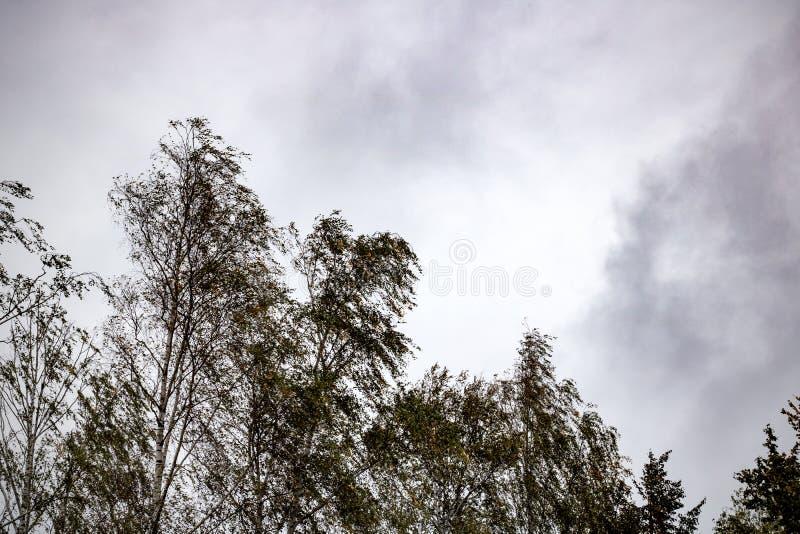 Oberteile Bäume im Wind gegen den Himmelhintergrund stockbild