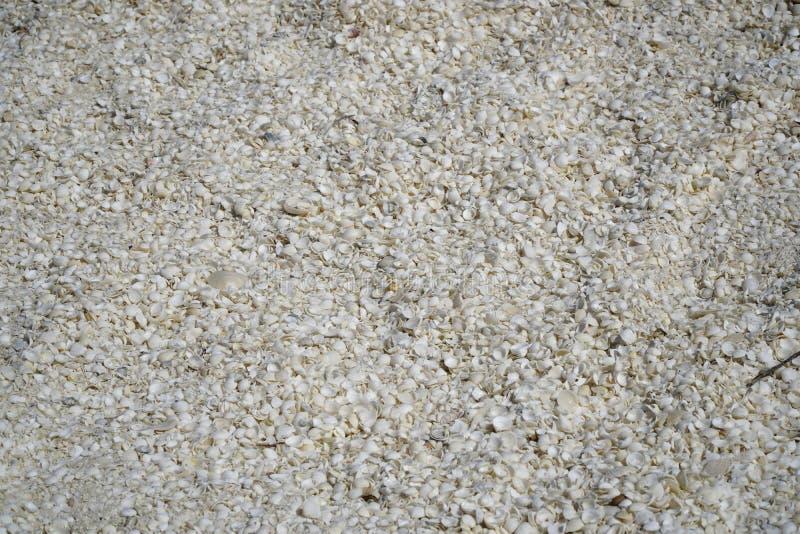 Oberteile fanden auf Shell Beach nahe Denham WA stockfoto