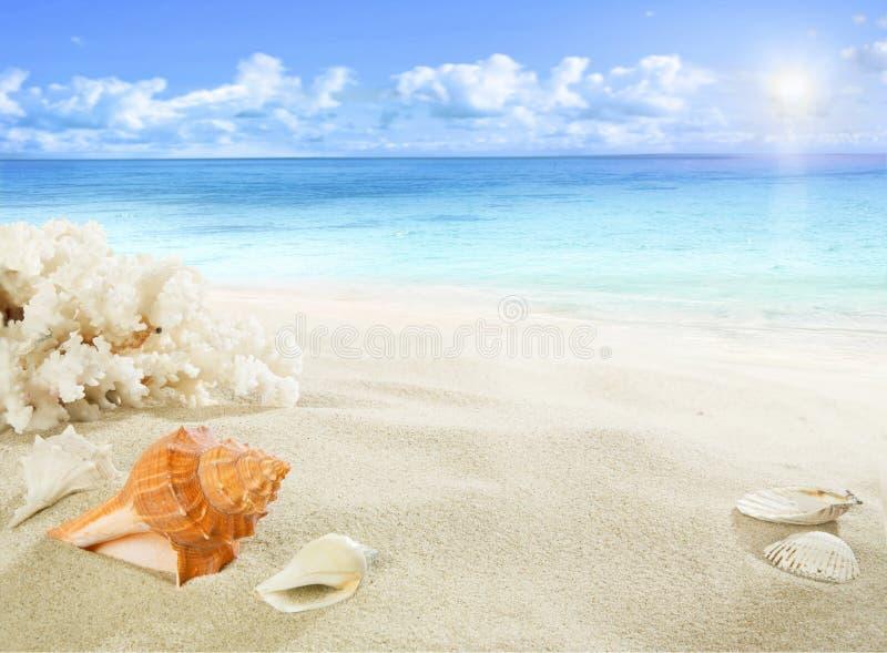 Oberteile und Koralle auf dem Strand stockfoto