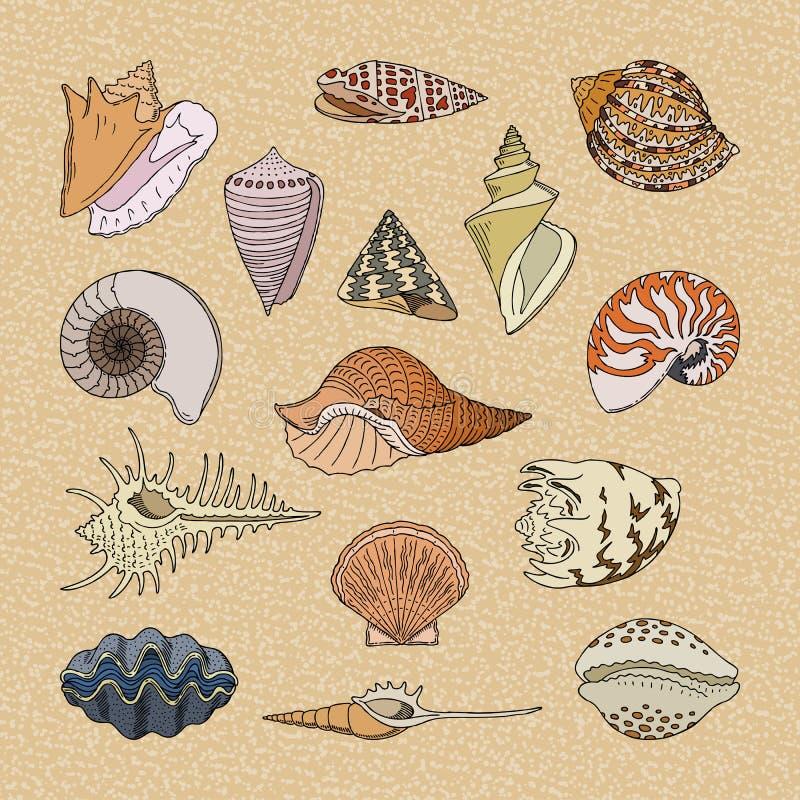 Oberteile vector Marinemuschel- und Ozean-HerzmuschelSHELL-Unterwasserillustrationssatz Schalentiere und Maschinenhälfte oder Tri lizenzfreie abbildung