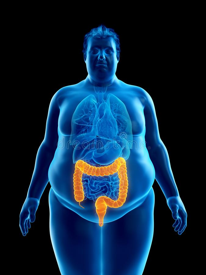 An obese mans colon. 3d rendered medically accurate illustration of an obese mans colon royalty free illustration