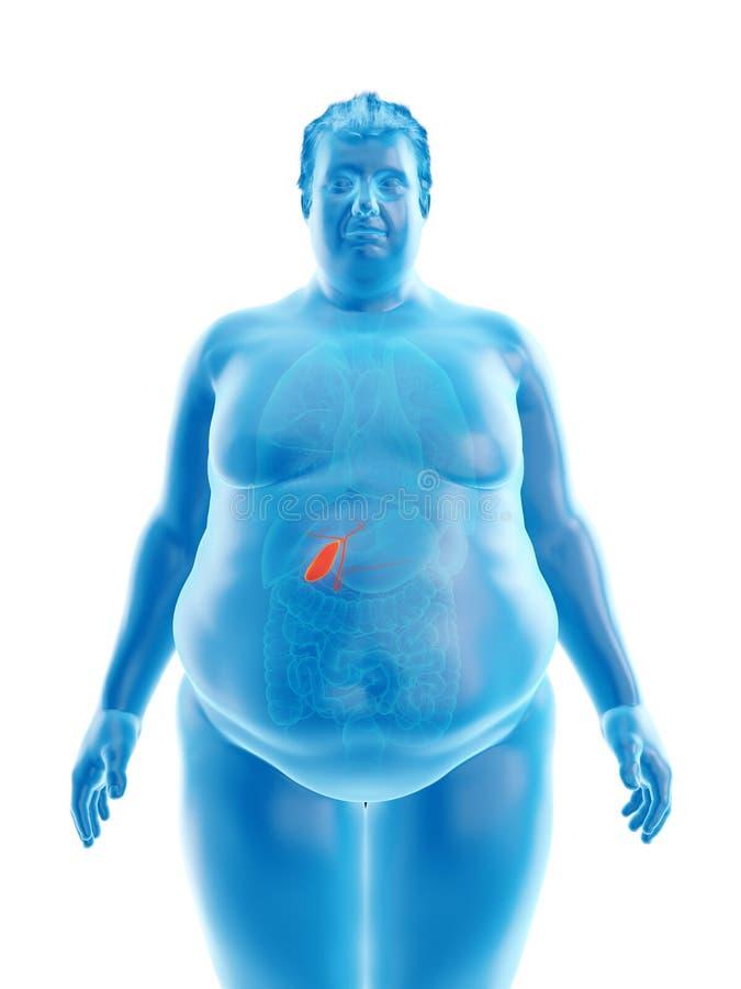 An obese mans gallbladder. 3d rendered medically accurate illustration of an obese mans gallbladder stock illustration