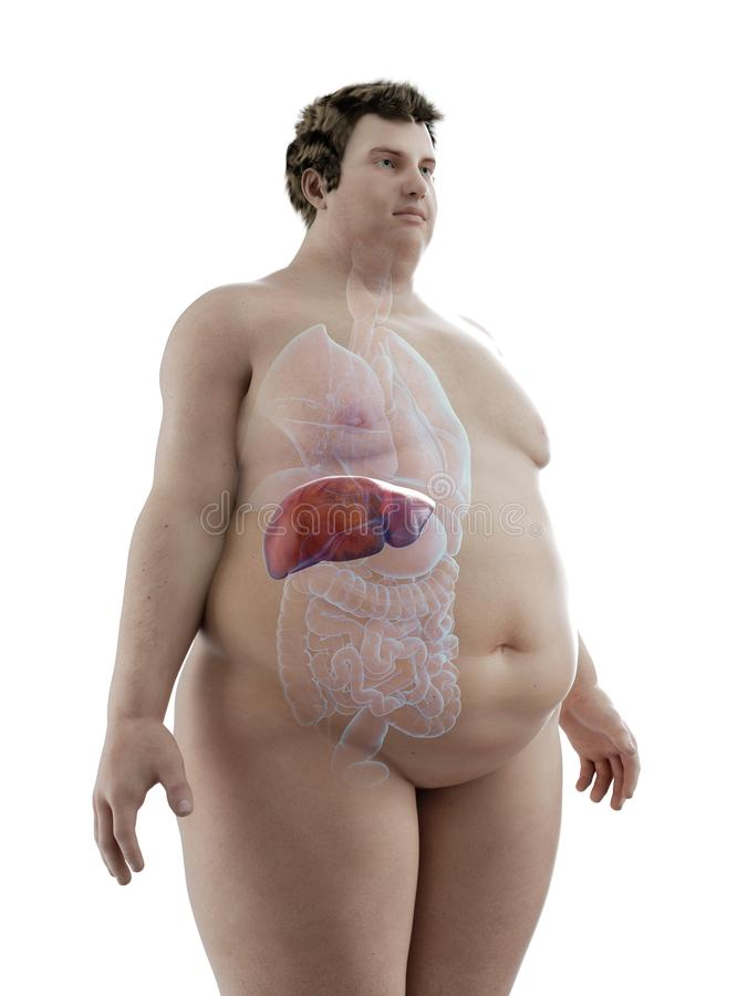 An obese mans liver. 3d rendered medically accurate illustration of an obese mans liver vector illustration