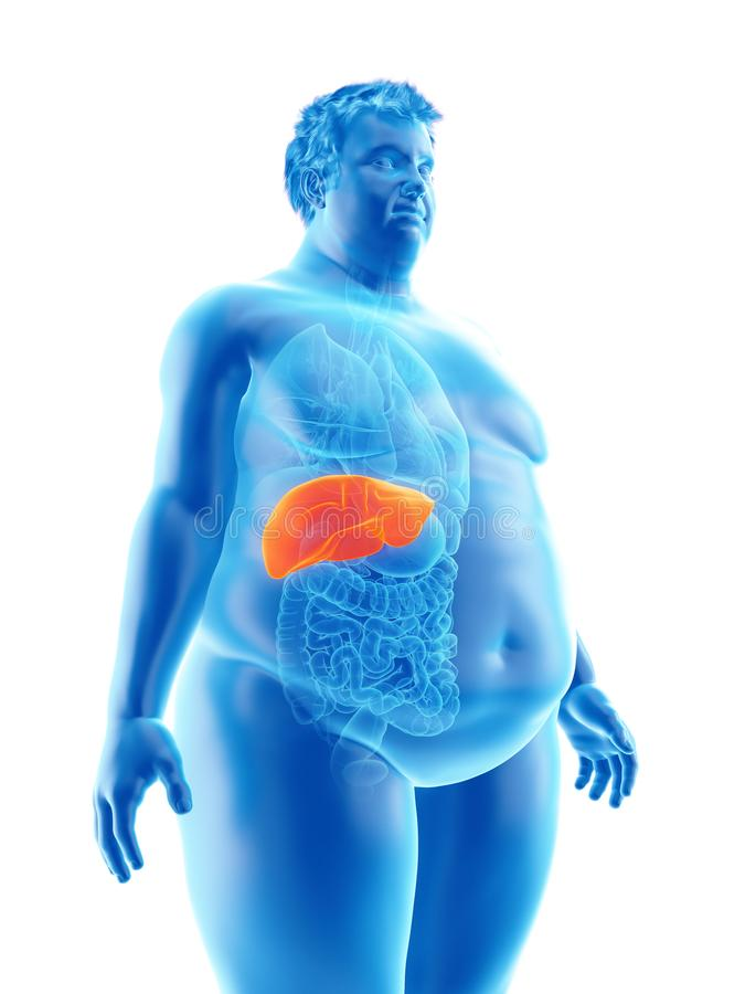 An obese mans liver. 3d rendered medically accurate illustration of an obese mans liver royalty free illustration