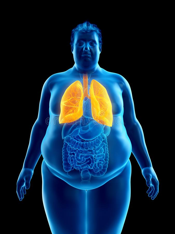 An obese mans lungs. 3d rendered medically accurate illustration of an obese mans lungs vector illustration