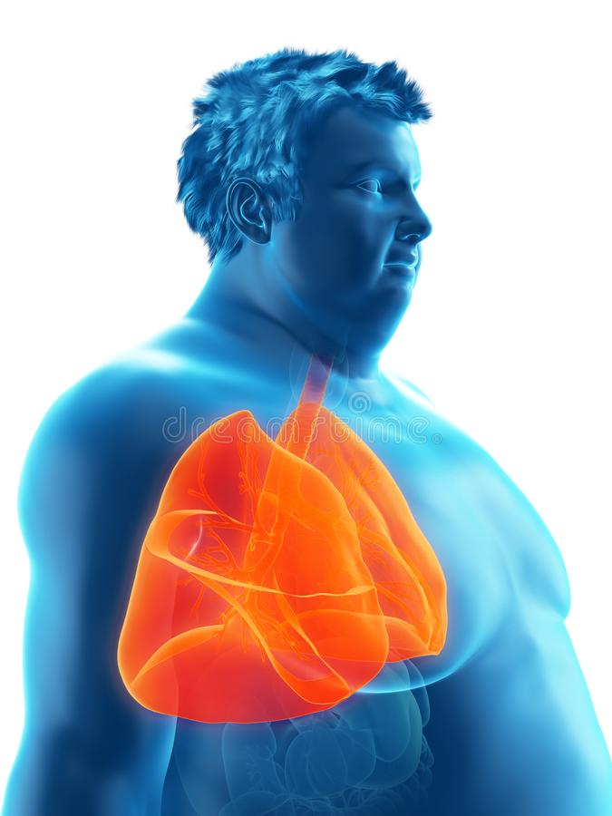 An obese mans lungs. 3d rendered medically accurate illustration of an obese mans lungs stock illustration