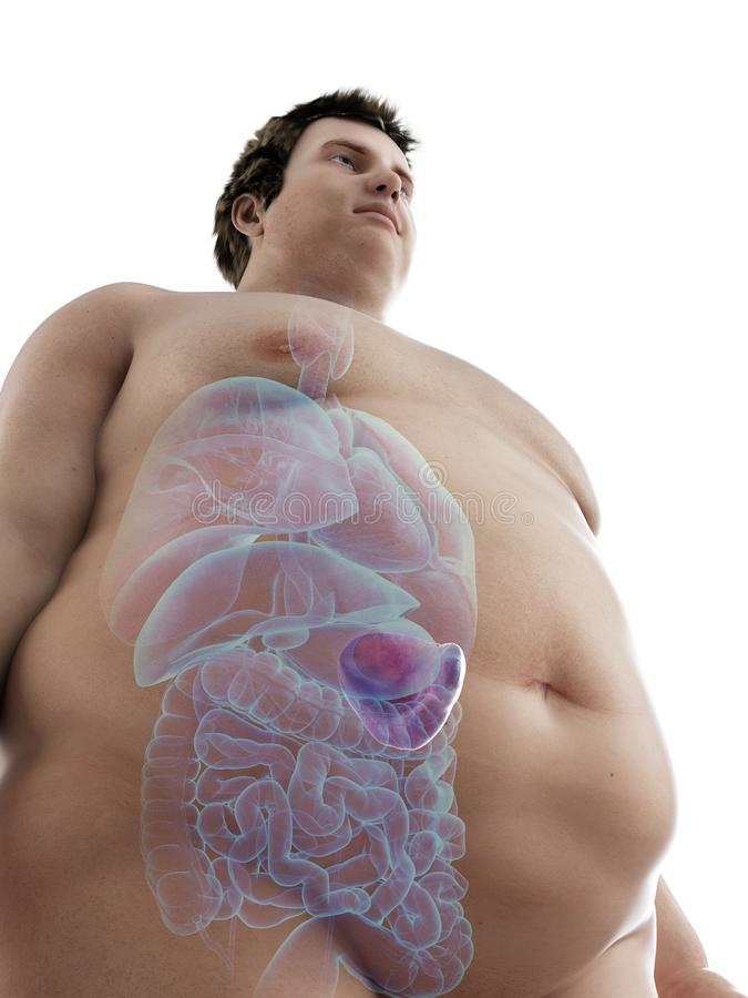 An obese mans spleen. 3d rendered medically accurate illustration of an obese mans spleen stock illustration