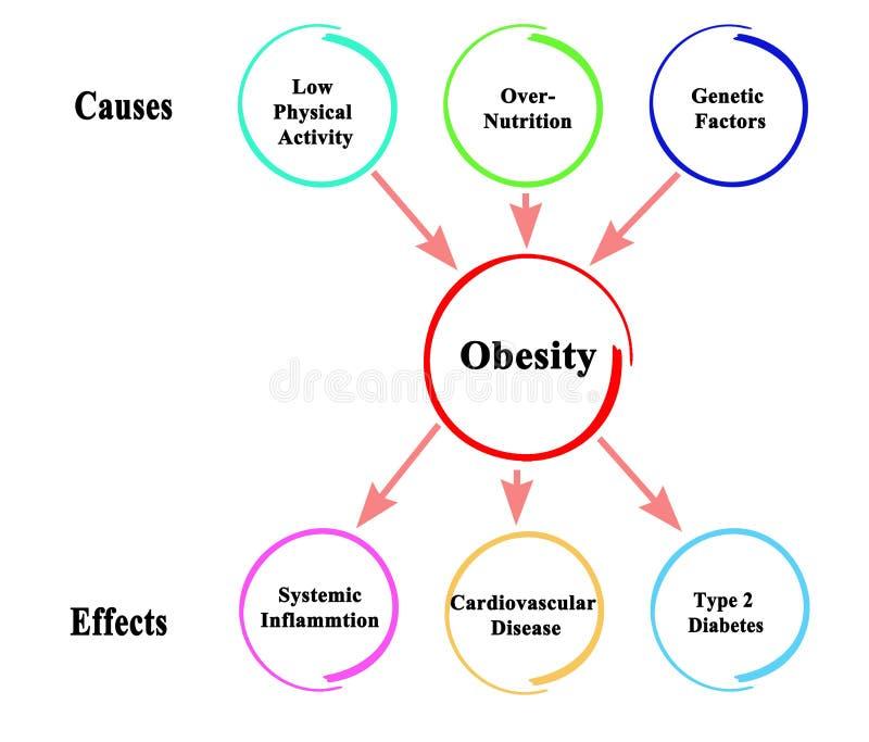 Obesity Stock Illustration Illustration Of Obesity 165444506