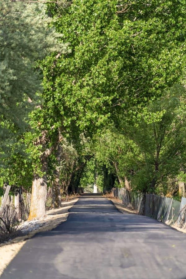 Obfici zieleni liście nadzwyczajni drzewa tworzy baldachim nad nasłonecznioną drogą obrazy royalty free