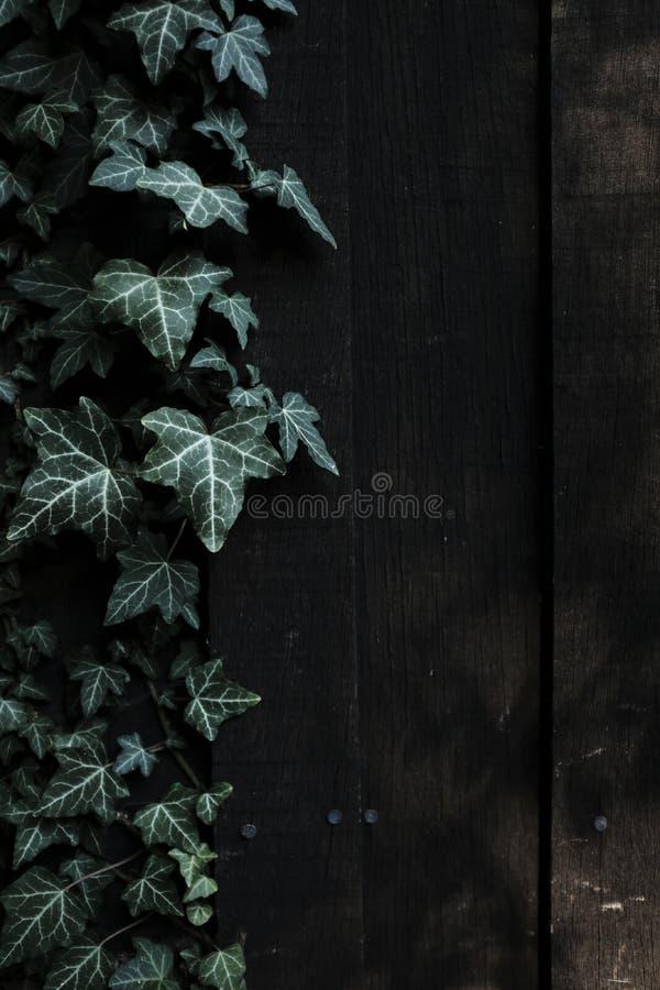 Obfitolistna ciemna drewniana ściana obraz royalty free