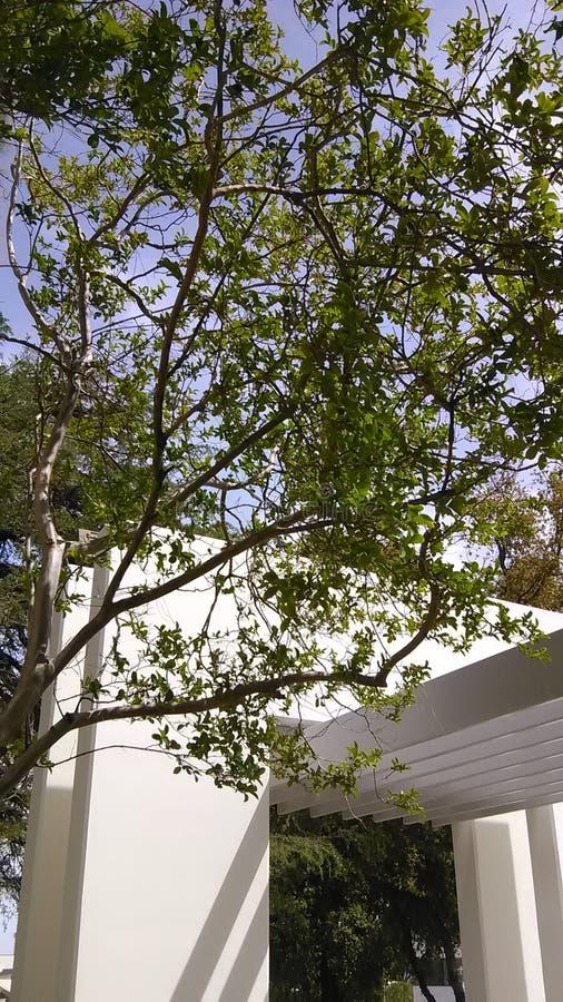 Obfitolistnego gree cudu drzewny świat obrazy stock