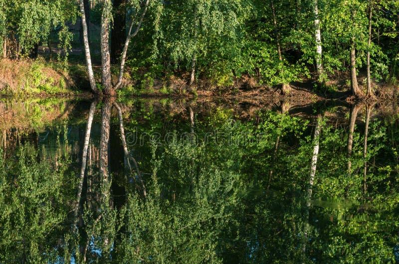 Obfitolistny gaj na banku odbijał w wodnej powierzchni mały jezioro zdjęcie stock