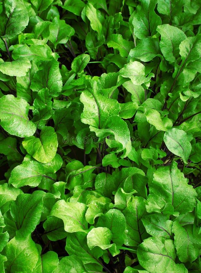 Obfitolistny zielony tło obrazy stock