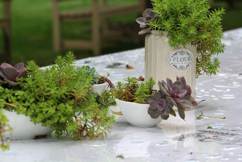 Obiadowy bankieta centerpiece z mech i roślinami zdjęcie stock