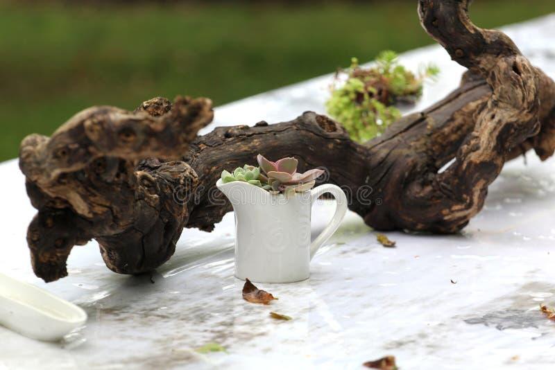 Obiadowy bankieta centerpiece z mech i roślinami obrazy stock