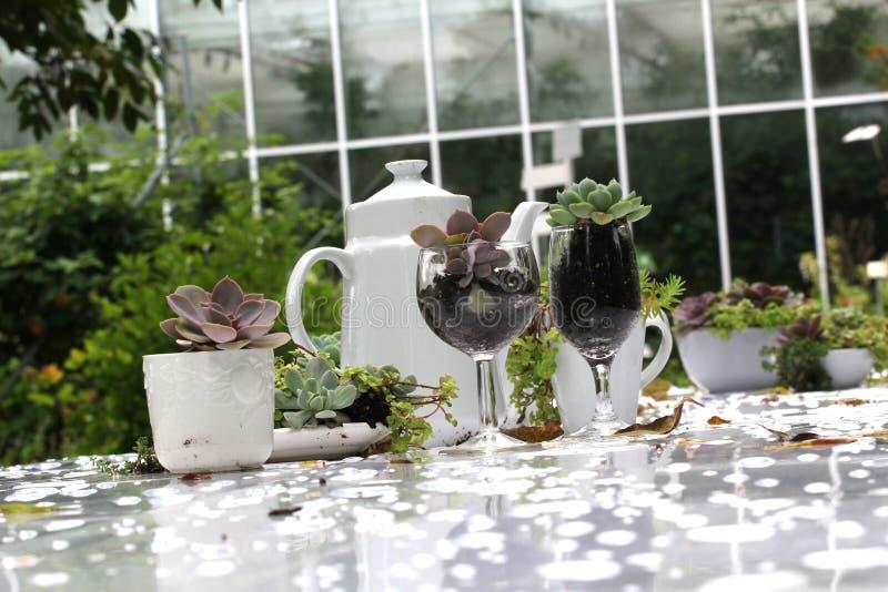 Obiadowy bankieta centerpiece z mech i roślinami fotografia stock