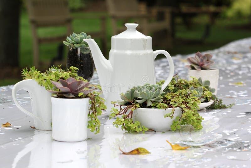 Obiadowy bankieta centerpiece z mech i roślinami zdjęcia stock