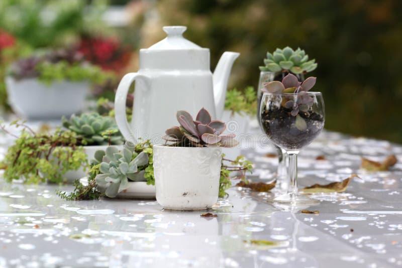 Obiadowy bankieta centerpiece z mech i roślinami zdjęcia royalty free