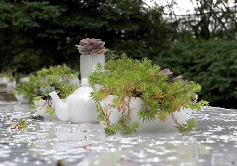 Obiadowy bankieta centerpiece z mech i roślinami fotografia royalty free