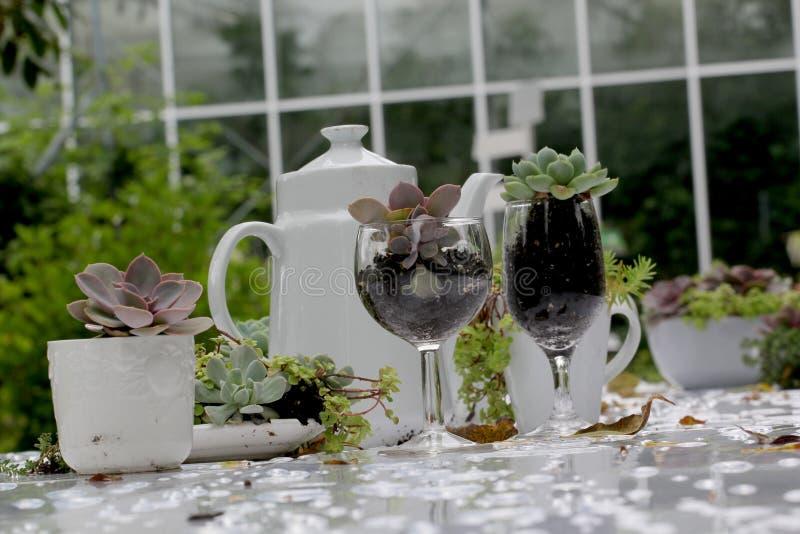 Obiadowy bankieta centerpiece z mech i roślinami obraz stock