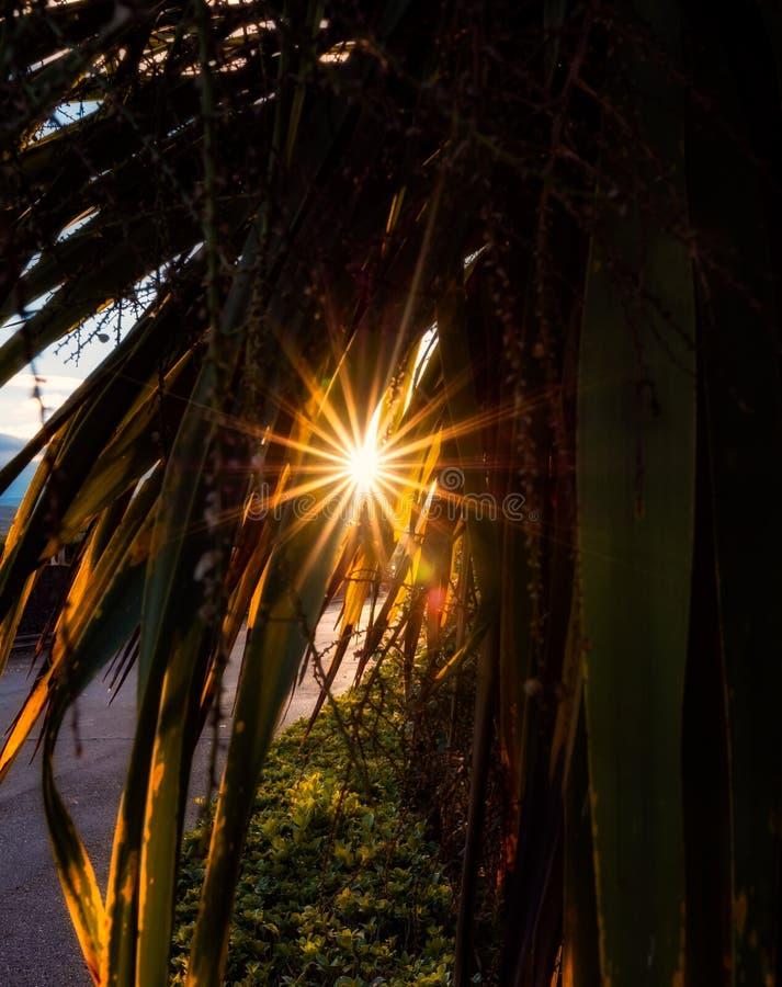 Obiektywu raca na tle słoneczny dzień obrazy stock