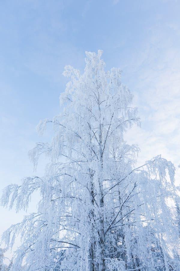 objętych śnieżni drzewa zdjęcia stock