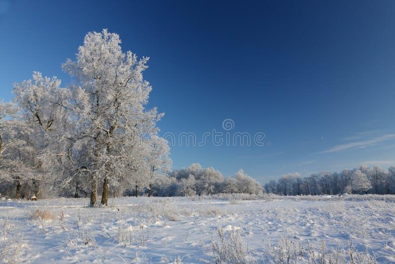 Download Objętych śnieżni drzewa obraz stock. Obraz złożonej z mroźny - 65225539