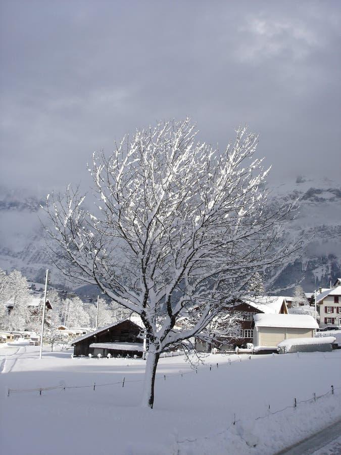 objętych grindelwald niedaleko Szwajcarii bałwana drzewa obrazy royalty free