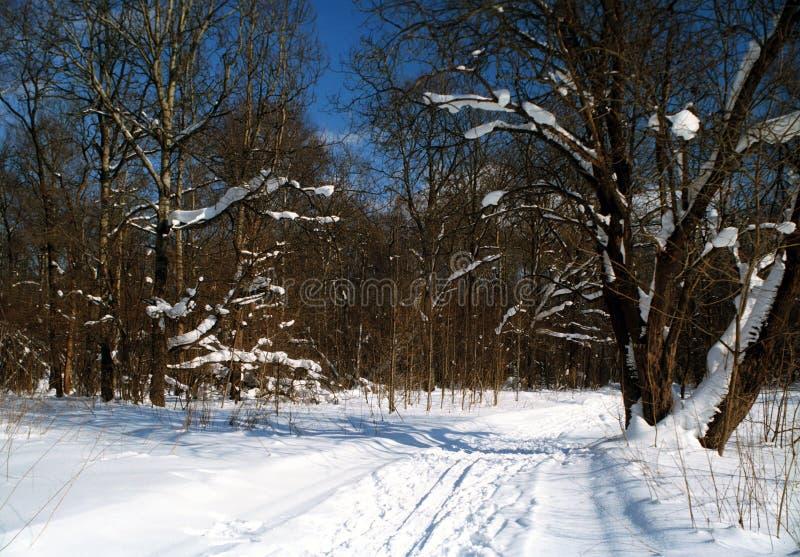 objętych leśny śnieg zdjęcie royalty free