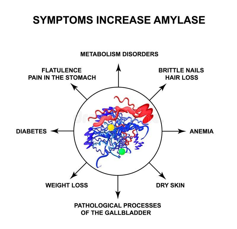 Objawy narosła amylaza Enzym amylaza Infographics Wektorowa ilustracja na odosobnionym tle ilustracja wektor