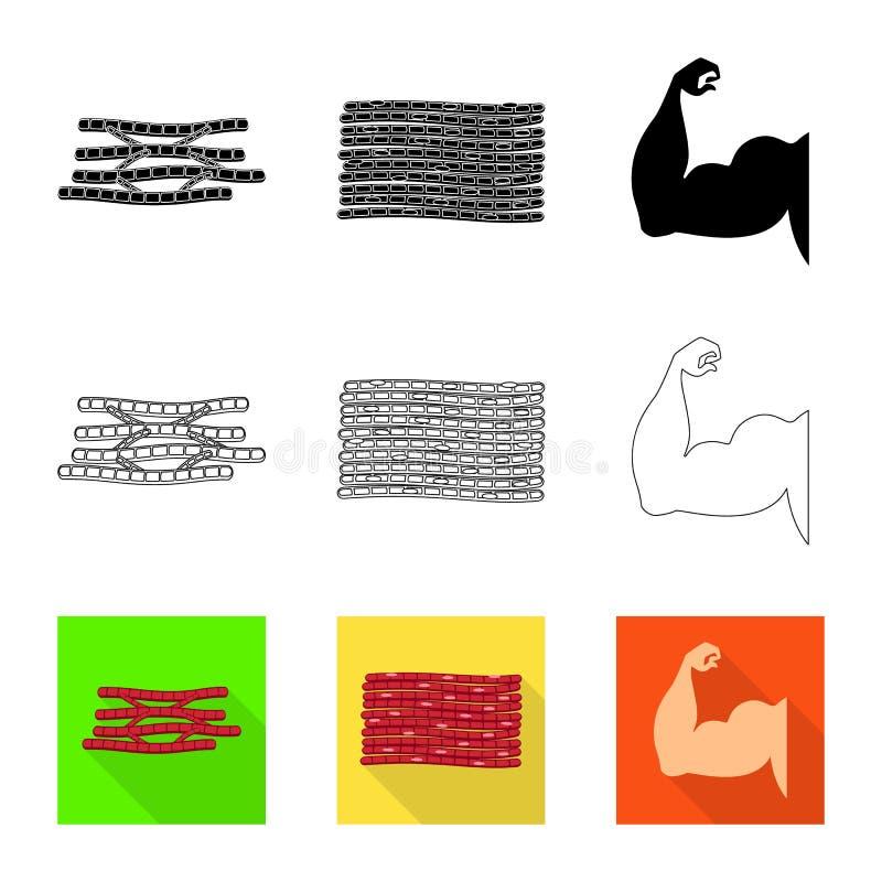 Objet d'isolement de fibre et de logo musculaire Placez du symbole boursier de fibre et de corps pour le Web illustration libre de droits