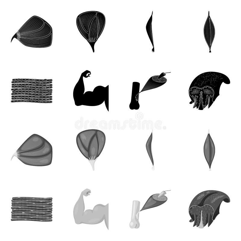 Objet d'isolement de fibre et de logo musculaire Placez de l'illustration de vecteur d'actions de fibre et de corps illustration de vecteur