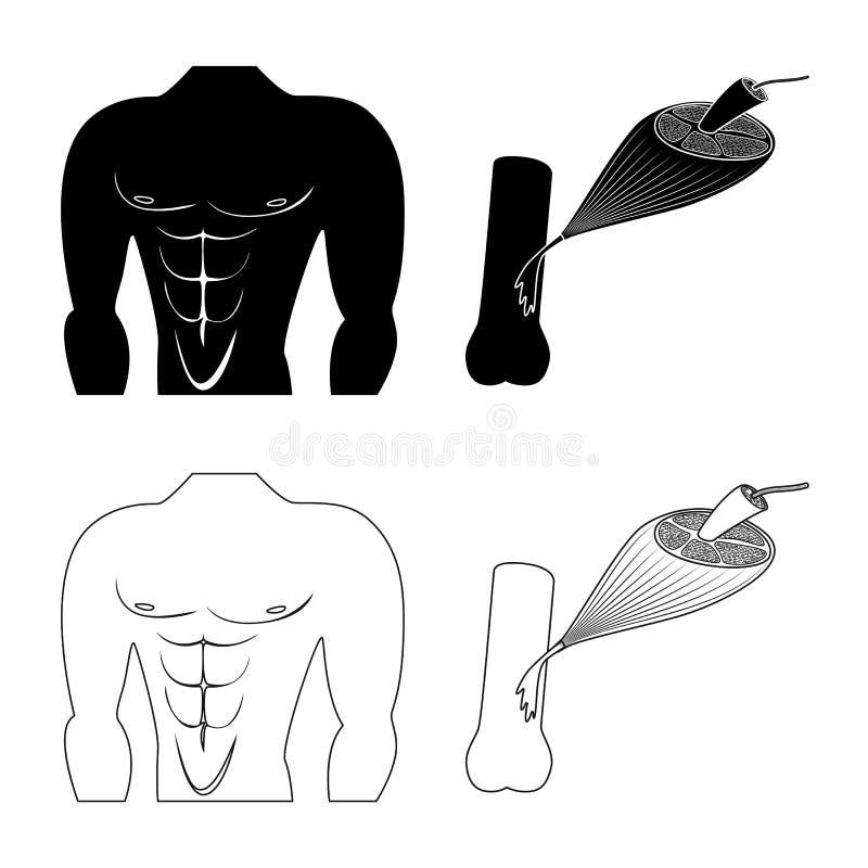 Objet d'isolement de fibre et de symbole musculaire Collection d'illustration de vecteur d'actions de fibre et de corps illustration de vecteur