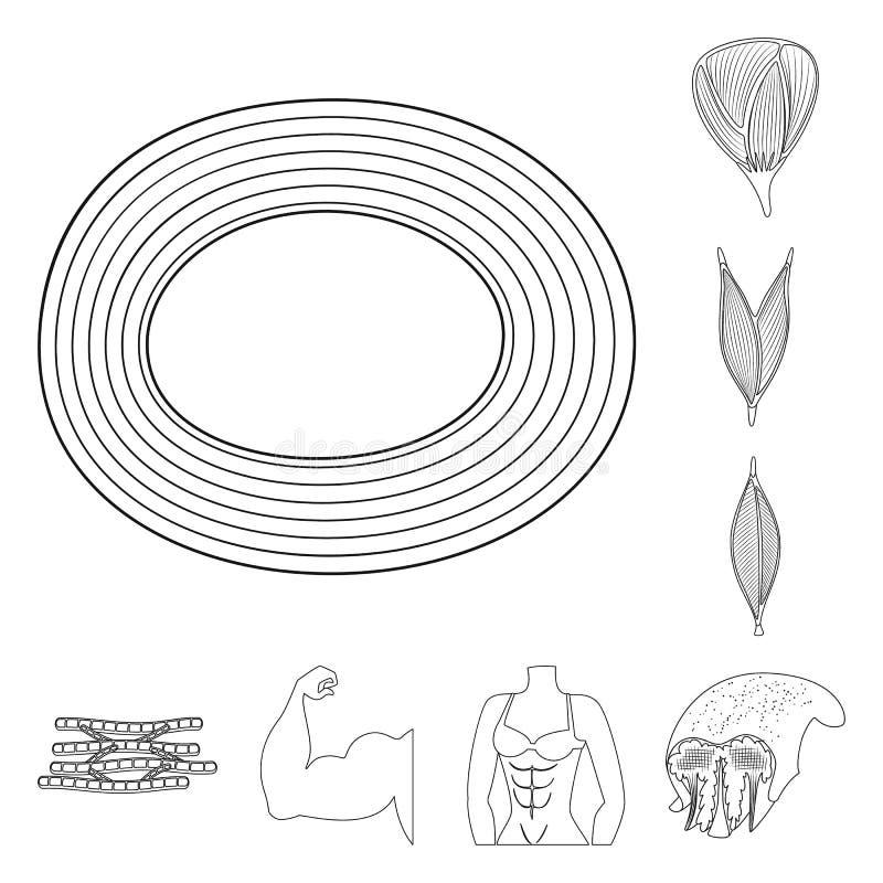 Objet d'isolement de fibre et de symbole musculaire Placez de l'ic?ne de vecteur de fibre et de corps pour des actions illustration libre de droits