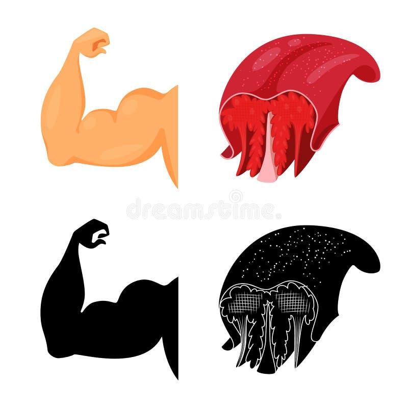 Objet d'isolement de fibre et de symbole musculaire Placez de l'ic?ne de vecteur de fibre et de corps pour des actions illustration de vecteur