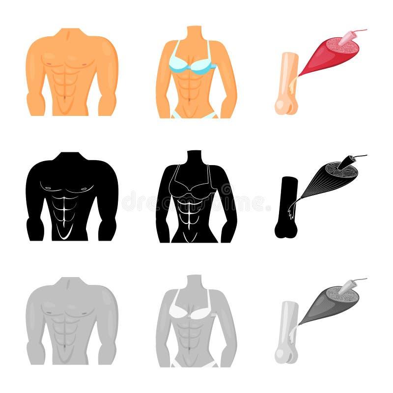 Objet d'isolement de fibre et de symbole musculaire Placez de l'illustration de vecteur d'actions de fibre et de corps illustration libre de droits